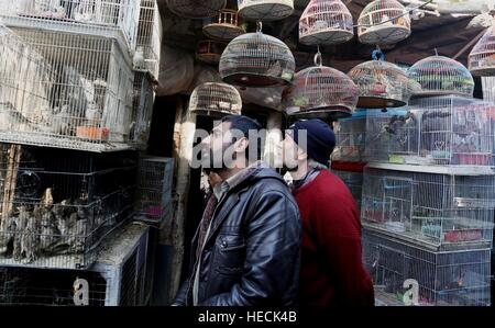 Kabul, Afghanistan. 19th Dec, 2016. Afghan men look at birds for sale at a bird shop at the Koch-i-Kah Faroshi (Straw - Stock Photo