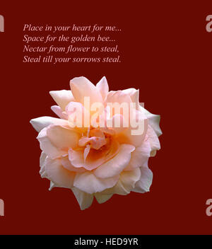 A beautiful pink rose cut-out on red background.  An original inspirational image and romantic verse by the poet - Stock Photo