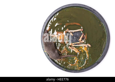Dead Mouse In Glue Trap Stock Photo 20933224 Alamy