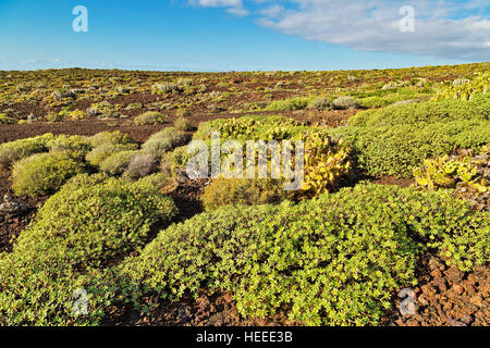 Landscape with prickly bushes on foreground near Punto Teno Lighthouse in north-west coast of Tenerife - Stock Photo