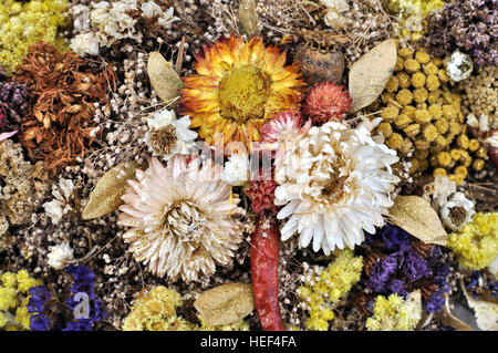 set of wild dried flowers - Stock Photo