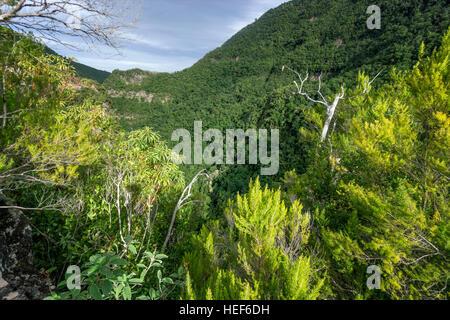Viewpoint, Laurel forest, Los Tilos Biosphere Reserve, La Palma, Canary Islands, Spain - Stock Photo