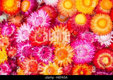 Colourful of paper flower for texture and background - Stock Photo