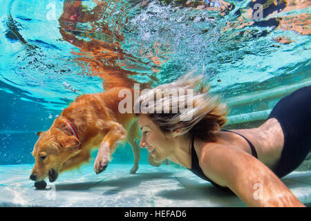 Underwater action. Smiley woman play with fun, training golden retriever puppy in swimming pool - jump and dive. - Stock Photo