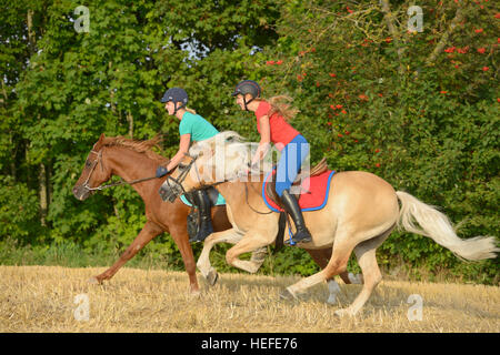 Young riders on back of Haflinger and Arabian horse galloping in a stubble field - Stock Photo