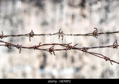 Close up of barbed wire - Stock Photo