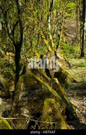 Deutschland, Nordrhein-Westfalen, Kreis Euskirchen, Gemeinde Hellenthal, Udenbreth, Reste des Westwall (Siegfriedstellung) - Stock Photo