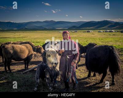Nomad with yaks (Bos mutus), Mongolia - Stock Photo