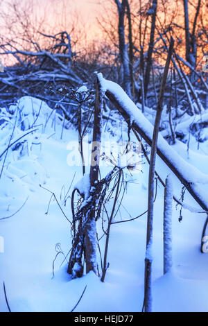 Snow forest in dusk at winter evening - Stock Photo