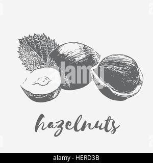 hazelnuts Organic Food - Stock Photo