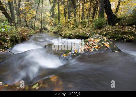 River Selke flowing through autumn forest, Selketal, Südharz, Lower Saxony, Germany - Stock Photo