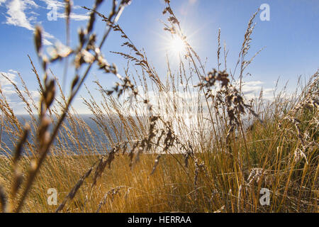 Sunset through grasses.  Bluff Trail Over Strait of Juan de Fuca.   Fort Ebbey State Park.  Whibey Island, WA.  - Stock Photo