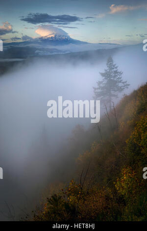 Mt Hood and misty tree in the Columbia River Gorge - Stock Photo