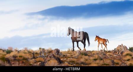Wild Mustang Horse in the Nevada desert - Stock Photo