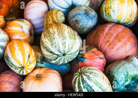 Large variety of colorful gourd, squash vegetables on stall - Stock Photo