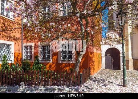 Magnolia tree in bloom, Prague Hradcany in Spring, Strahov monastery courtyard, Czech republic - Stock Photo