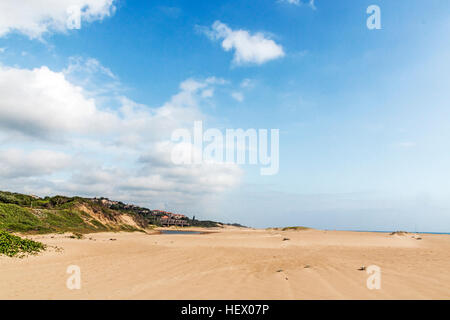 Indigenous plant growing in the beach sand on dune on beach landscape - Stock Photo
