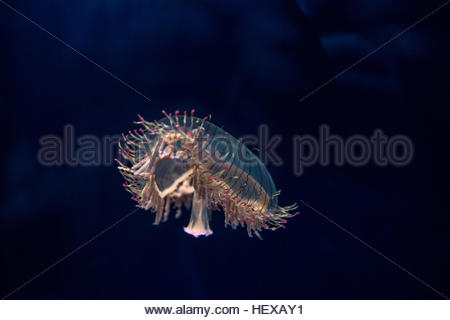 Beautiful Sea Flower In Underwater World With Corals And