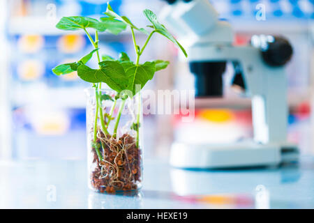 Seedlings in a beaker, close up. - Stock Photo