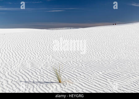 White gypsum sand dune and lone grass plant at White Sands National Monument near Alamogordo, New Mexico, USA - Stock Photo