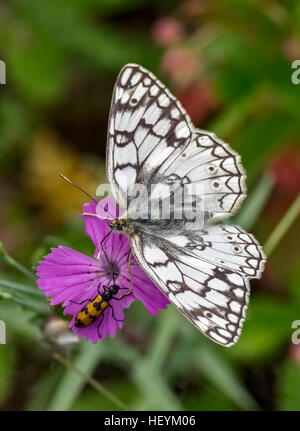 Butterfly and beetle sitting on a purple flower - Stock Photo