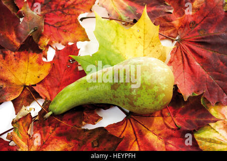 Pear with colourful autumn leaves - Stock Photo