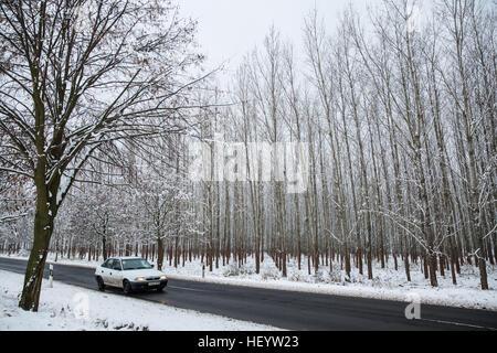 Sátoraljaújhely, Hungary. 24th December, 2016. Snow beside the road at Sátoraljaújhely in Borsod-Abaúj-Zemplén, - Stock Photo