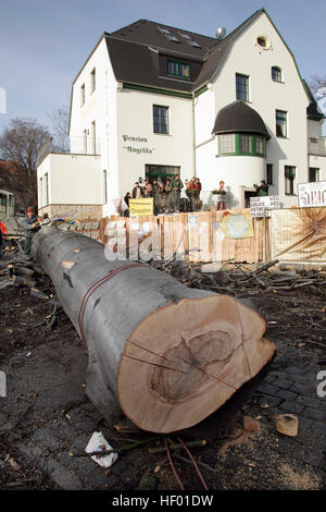 Robin Wood environmental activists were removed from a 300-year-old tree that was chopped down in order to build - Stock Photo