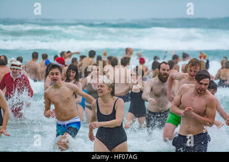 Sennen, Cornwall, UK. 25th Dec, 2016. Hunderds of people took to the sea for the annual Christmas day swim at Sennen. - Stock Photo
