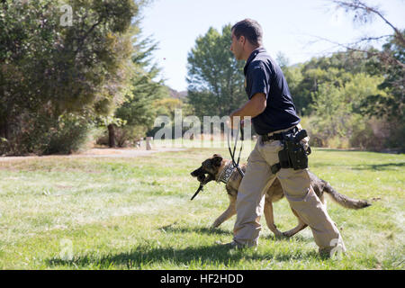 Ahmed Seirafi, K-9 handler on Marine Corps Logistics Base Barstow, Calif., trains with his dog in searching for - Stock Photo
