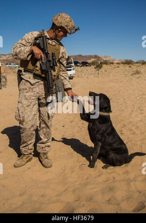 U.S. Marine Cpl. Ryan Stroad, a dog handler with 2d Combat ...