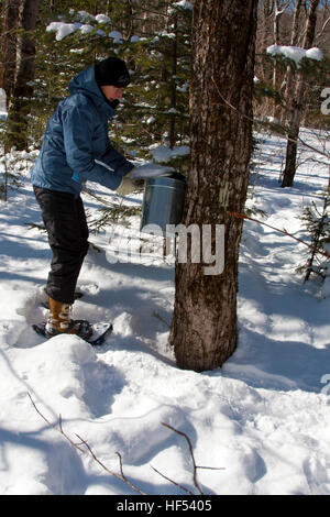 The Appalachian Mountain Club Highland Center at Crawford Notch, New Hampshire, USA, gathering maple sap from collection - Stock Photo