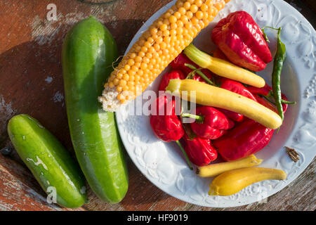 Fresh home grown vegetables (sweet corn, courgettes, red peppers, and small squashes) harvested and grown on an - Stock Photo