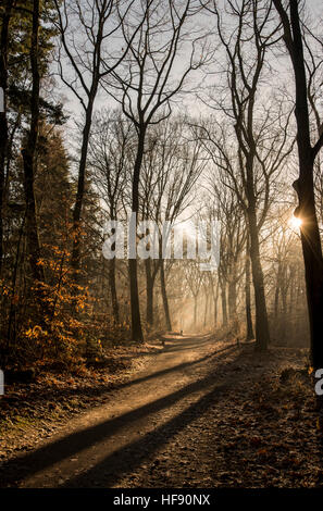 View of a forest in the winter with the sun casting long shadows - Stock Photo