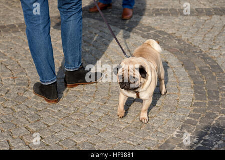 Cute pug dog at the street - Stock Photo