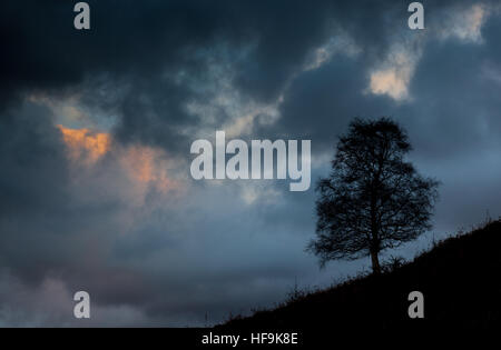 A lone tree on Loughrigg Fell, silhouetted against an evening sky, near Grasmere, Lake District, Cumbria, UK - Stock Photo