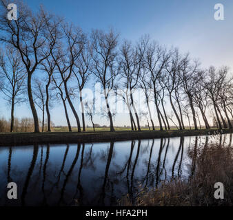Silhouettes of leaning poplar trees bordering canal Damse Vaart in winter near Damme, West Flanders, Belgium - Stock Photo