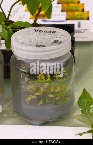 Laboratory Propagation Scientific Flasks Plants Growing