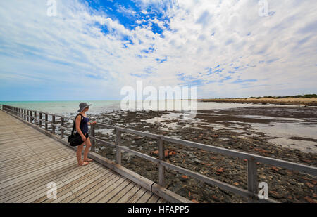 A woman observing the stromatolites from the boardwalk at Hamelin Pool Marine Nature Reserve. Shark Bay, Western - Stock Photo