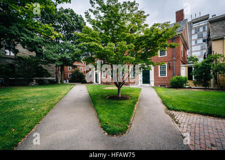 Buildings and walkways at the Harvard Yard, at Harvard University, in Cambridge, Massachusetts. - Stock Photo