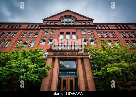 The Harvard Museum of Natural History, in Cambridge, Massachusetts. - Stock Photo