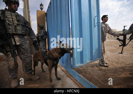 'Max' a military working dog, dog assigned to U.S. Army Sgt. Kyle Harris from Essex, Conn., watches a Sons of Iraq - Stock Photo