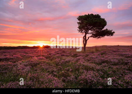 The sun rising over the North York Moors National Park - Stock Photo