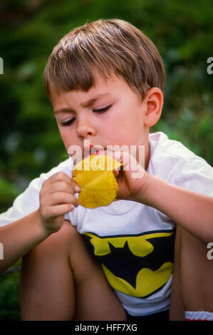A four-year old boy is absorbed in concentration over a yellow leaf . - Stock Photo