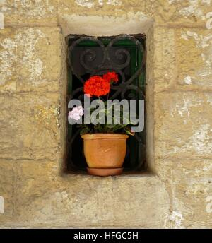A bright red geranium in a clay pot in a window surrounded by thick stone wall - Stock Photo