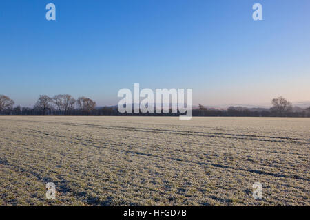 A winter wheat field covered in frost with trees, hills and hedgerows in a Yorkshire wolds landscape under a clear - Stock Photo