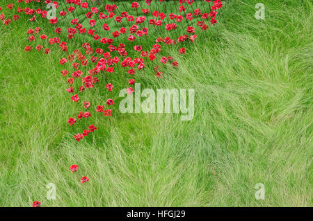 Part of the Poppy Wave Installation at Lincoln Castle. Designer Tom Piper, Artist Paul Cummins. - Stock Photo
