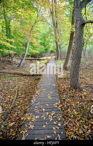 Wooden Walkway Path Through Woods - Stock Photo