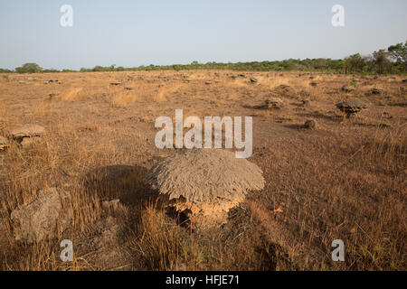 Gbderedou Baranama, Guinea, 2nd May 2015; This village and local area will be flooded by the dam. Termite mounds - Stock Photo