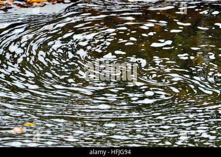 White foam floating on the surface of a pond in a stream in Alberta Canada - Stock Photo